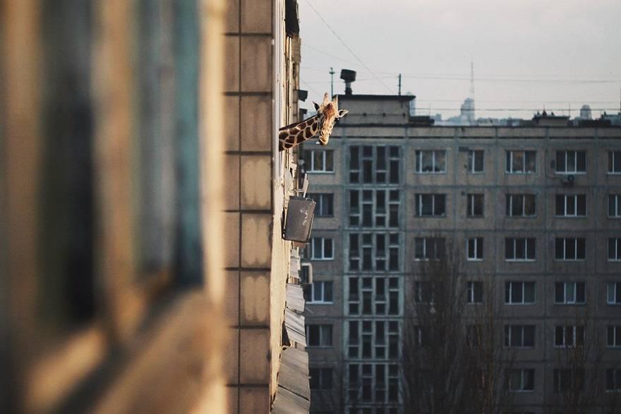 Врозь с квартирным рынком
