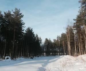 КП «Приветное» (12.02.15)