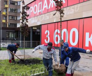ЖК «Молодежный IV»: благоустройство придомовой территории (фото из группы «Вконтакте»)